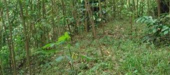 Dijual Tanah Kosong Non-Perum di Rancanaya, Cilongok, Banyumas, Jawa Tengah