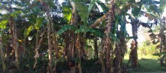 Jual Tanah Kosong di Patikraja - Banyumas - Info Property Purwokerto