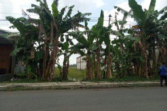 Dijual Tanah Kosong di Kroya - Info Jual Beli Properti Cilacap
